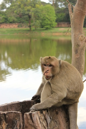 The monkey that nearly bit my face off near the entrance to Angkor Wat.