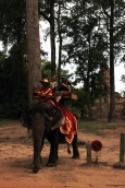 An elephant roams near Angkor Thom.